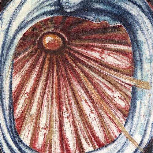 Стриж-канатоходец фото